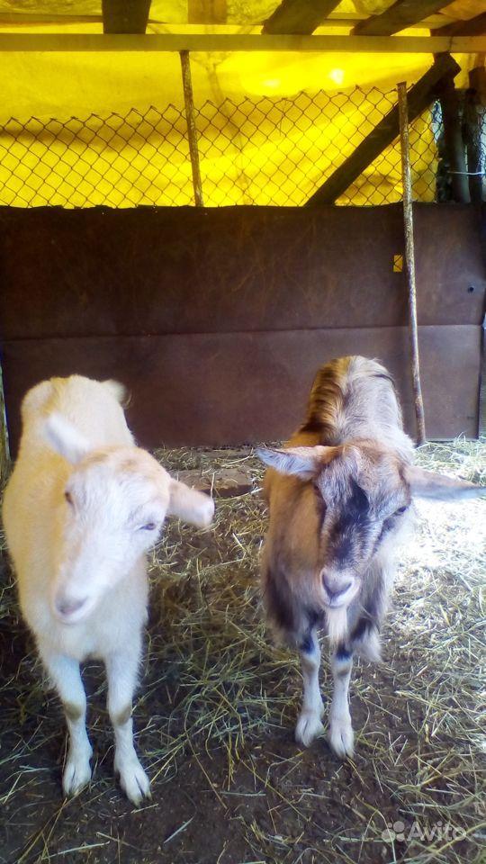 самостоятельными категориями катрин кози в красном селе онлайн вопросы конкурсу обсуждаем