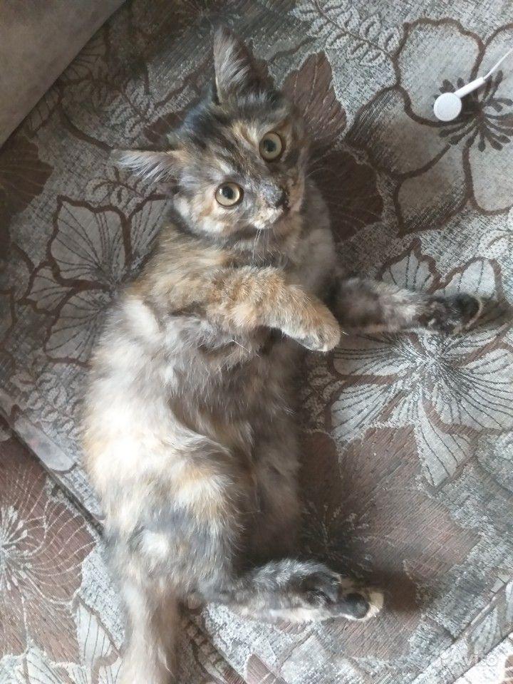 Кошечка
