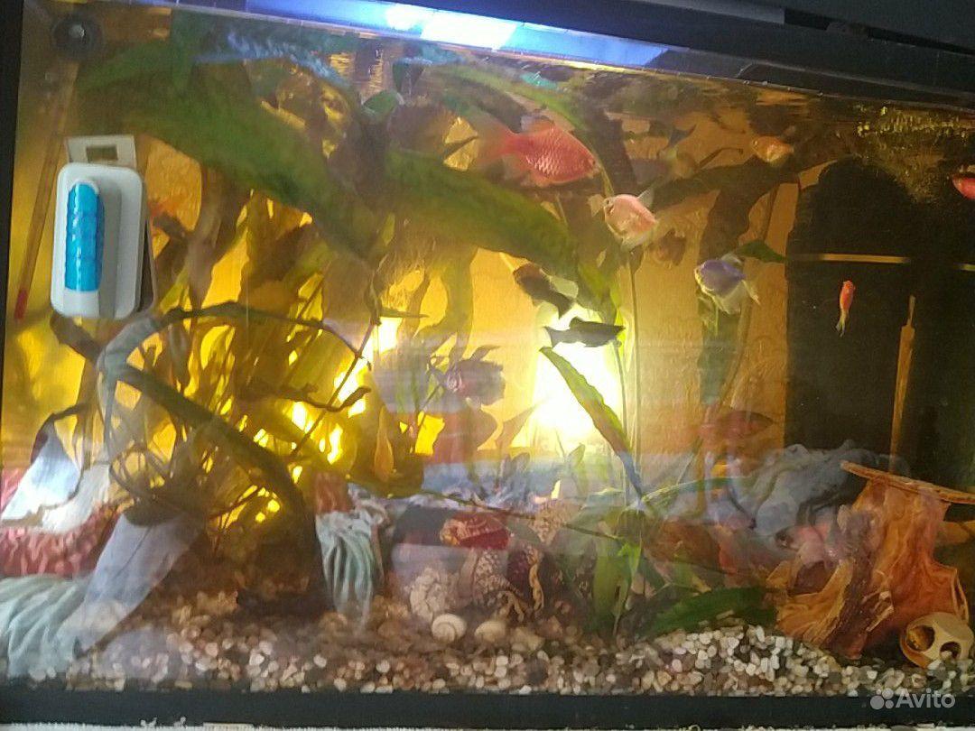 Аквариум 70 литров с рыбками купить на Зозу.ру - фотография № 2