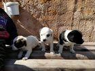 Лапочки щеночки ищут новый дом