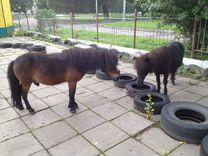 Продаются пони
