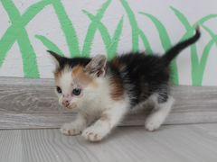 Котята, родились 8 апреля