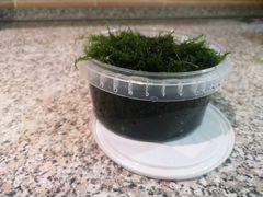 Яванский мох. Много