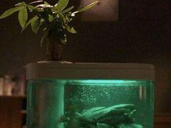 Аквапоника - умный аквариум