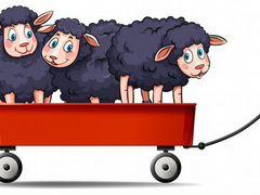 Овцы,бараны,зуббрак