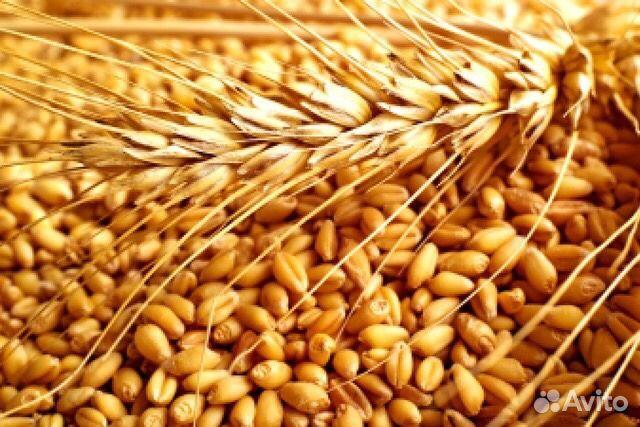 Дать объявление зерно вакансии в зеленограде свежие