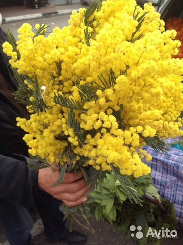 Купить мимозы в уфе доставка цветов светлогорск беларусь
