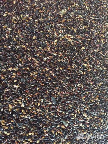 Семена суданской травы. суданка 89530331918 купить 1