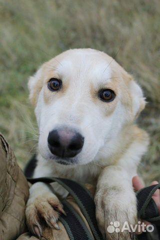 Отдам щенка девочку купить на Зозу.ру - фотография № 1