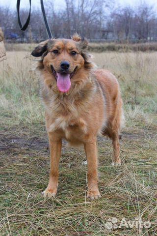 Собака в добрые руки купить на Зозу.ру - фотография № 10