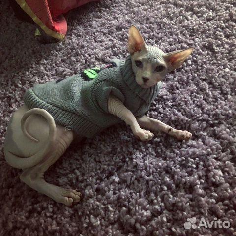 Одежда для собачки или кошечки 89045224646 купить 1