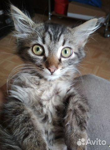Котята в добрые руки купить 6
