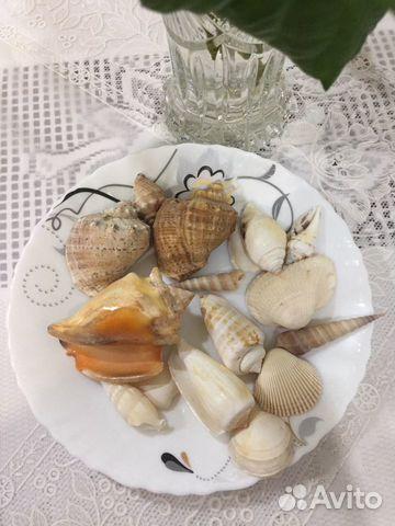 Ракушечки морские 89274553050 купить 3