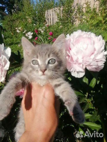 Котенок мальчик 2 месяца
