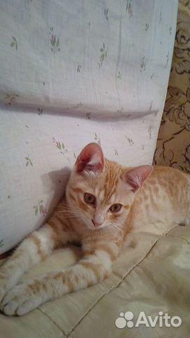 Котик  89886089750 купить 1