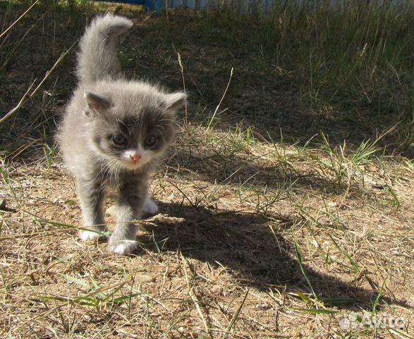 Котенок в добрые руки  89292344145 купить 3