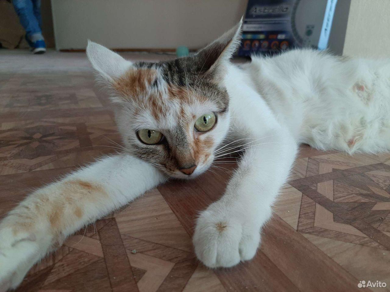 Кошка  89610008181 купить 1