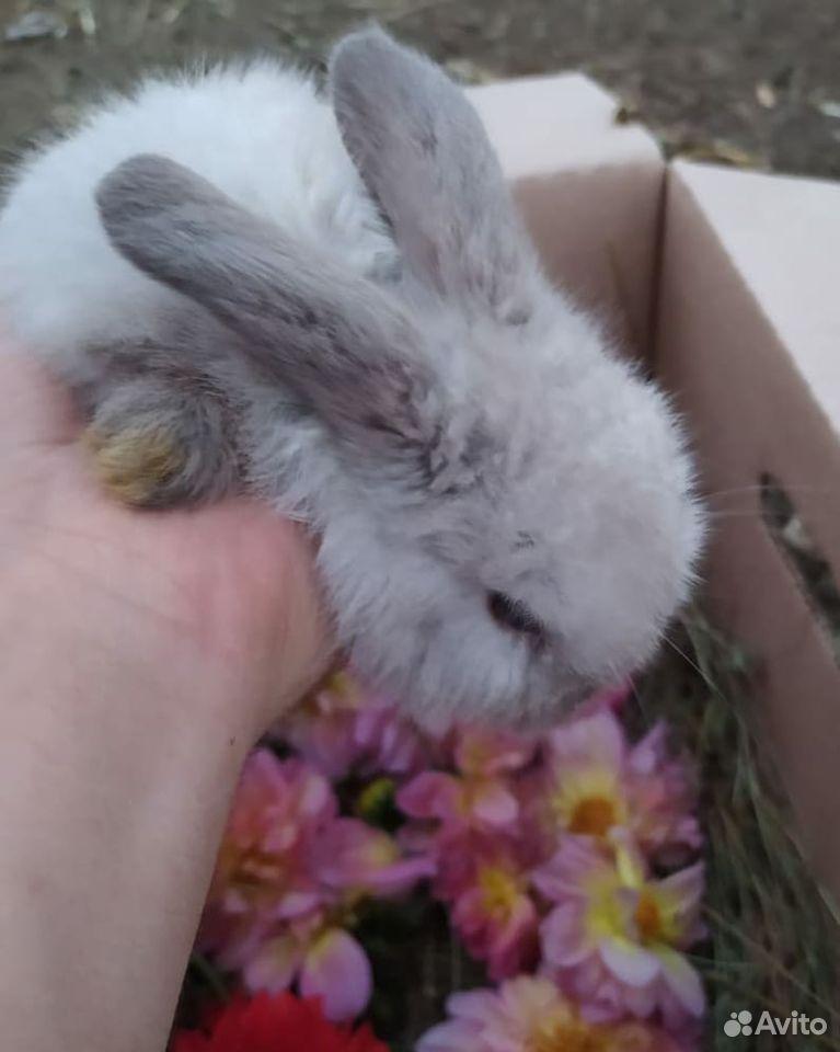 Кролики разных пород  89887675229 купить 3