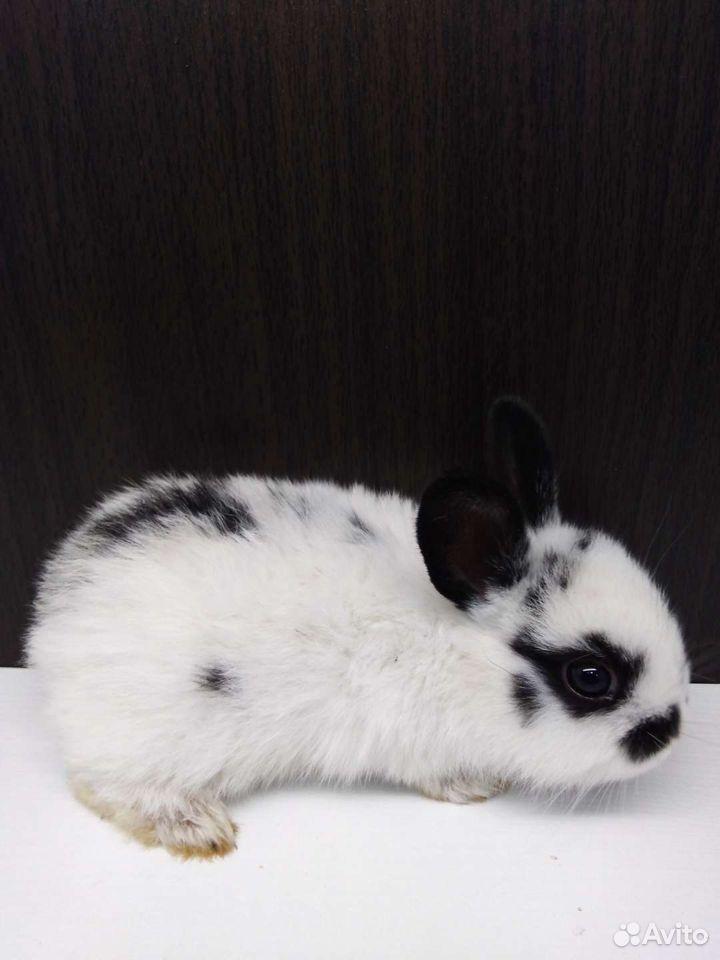 Крольчата  89676032072 купить 3