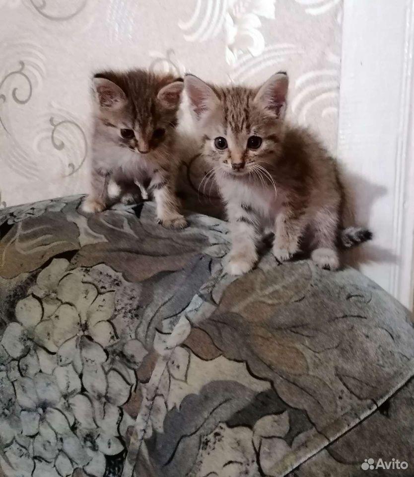 Котята в добрые руки  89276495515 купить 3