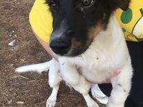 Щенки собаки — Собаки в Геленджике