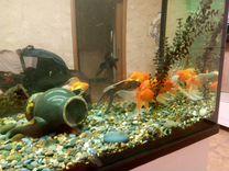 Продаю золотых рыбок — Аквариум в Геленджике