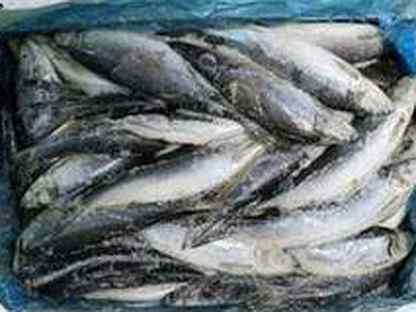 Селедка Рыба Морепродукты
