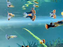 Растения, рыбки, большая коряга