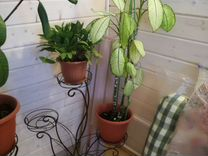Подставки для растений 2 шт