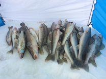 Сенькино пермский край рыбалка