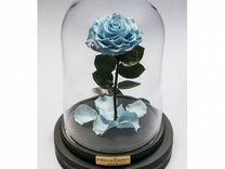 Роза в колбе-голубая(италия) — Растения в Саратове