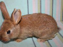 Продажа кроля